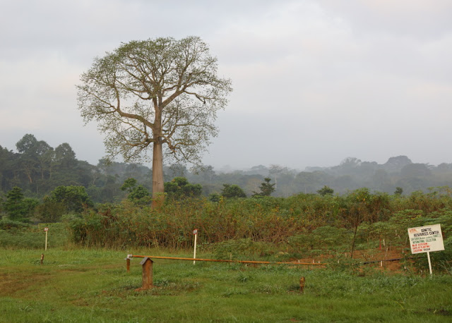 forest and crops at the heart of Ibadan