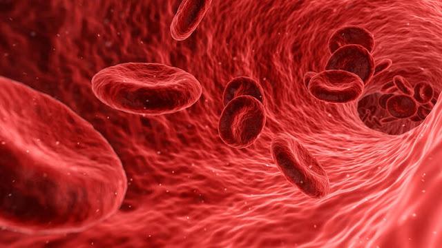 Για πρώτη φορά δημιουργήθηκαν στο εργαστήριο τέλεια ανθρώπινα αιμοφόρα αγγεία
