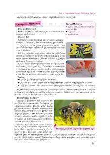 8. Sınıf Fen Bilimleri Ders Kitabı Cevapları Tutku Sayfa-158