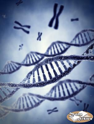 Gen, Kromosom, DNA, RNA, Pengertian Gen, Definisi Gen, Apa itu Gen, Sifat-sifat Gen, Peranan Gen, Gen