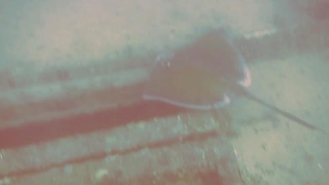 Pompano Beach Diving