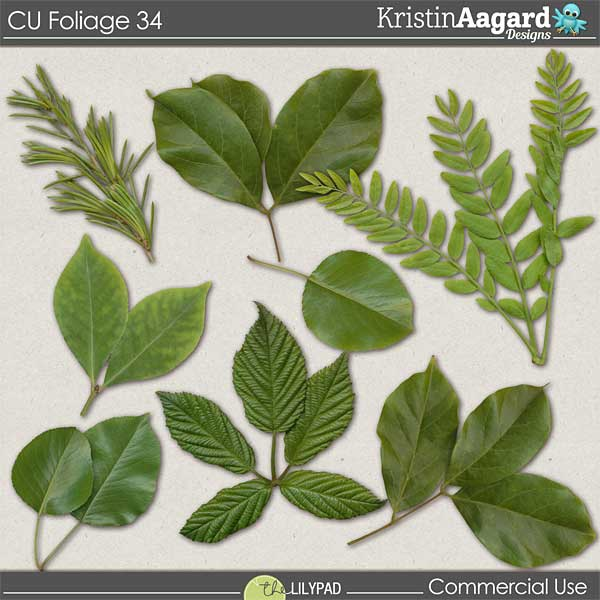 http://the-lilypad.com/store/digital-scrapbooking-cu-foliage-34.html