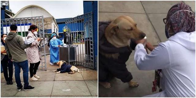Преданный пёс три месяца ждал у дверей больницы, не зная, что хозяина забрал CoViD-19