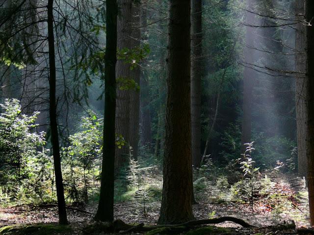 besplatne pozadine za desktop 1024x768 free download tamna šuma