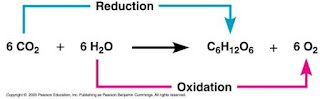 Reaksi pada fotosintesis