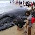 Filhote de baleia encalha no RJ e população se mobiliza para devolvê-lo ao mar