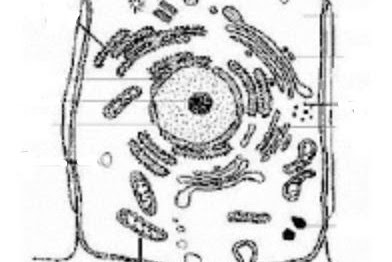 Perhatikan gambar sel hewan berikut!    Proses yang terjadi pada organel X adalah ....