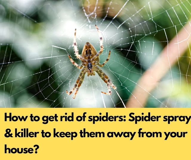 How to get rid of spiders: Spider spray & killer to keep them away from your house?