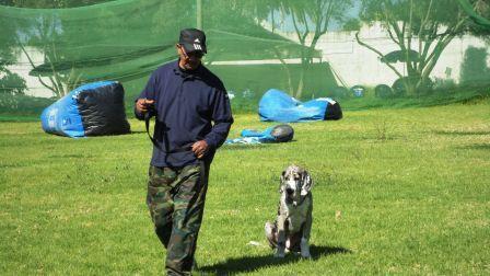 dressage de chien à domicile à rabat, temara, kenitra