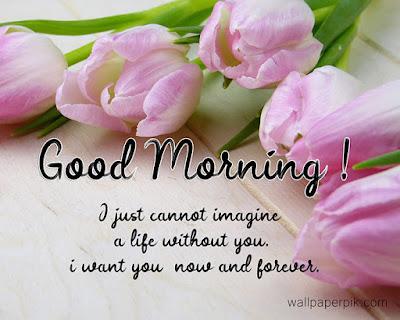 lovely flower best good morning images new wallpaper pics