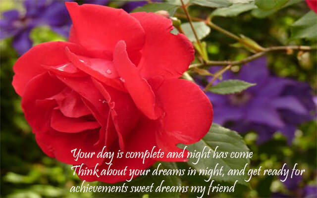 Good Night Flower images Quotes