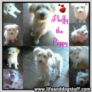 Fluffy the Puppy Growing Up stages