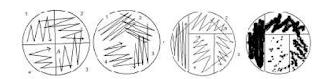 Teknik Penanaman dengan Goresan (Streak) Goresan Kuadran (Streak quadrant)