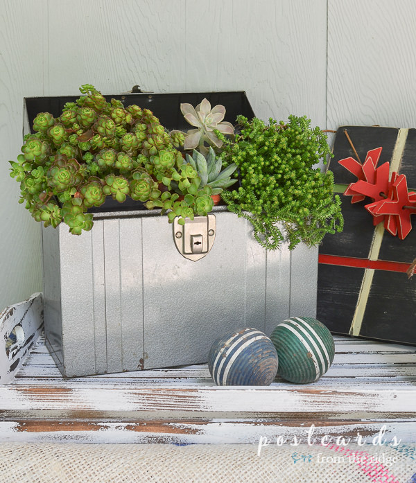 vintage metal box with succulents and wooden croquet balls