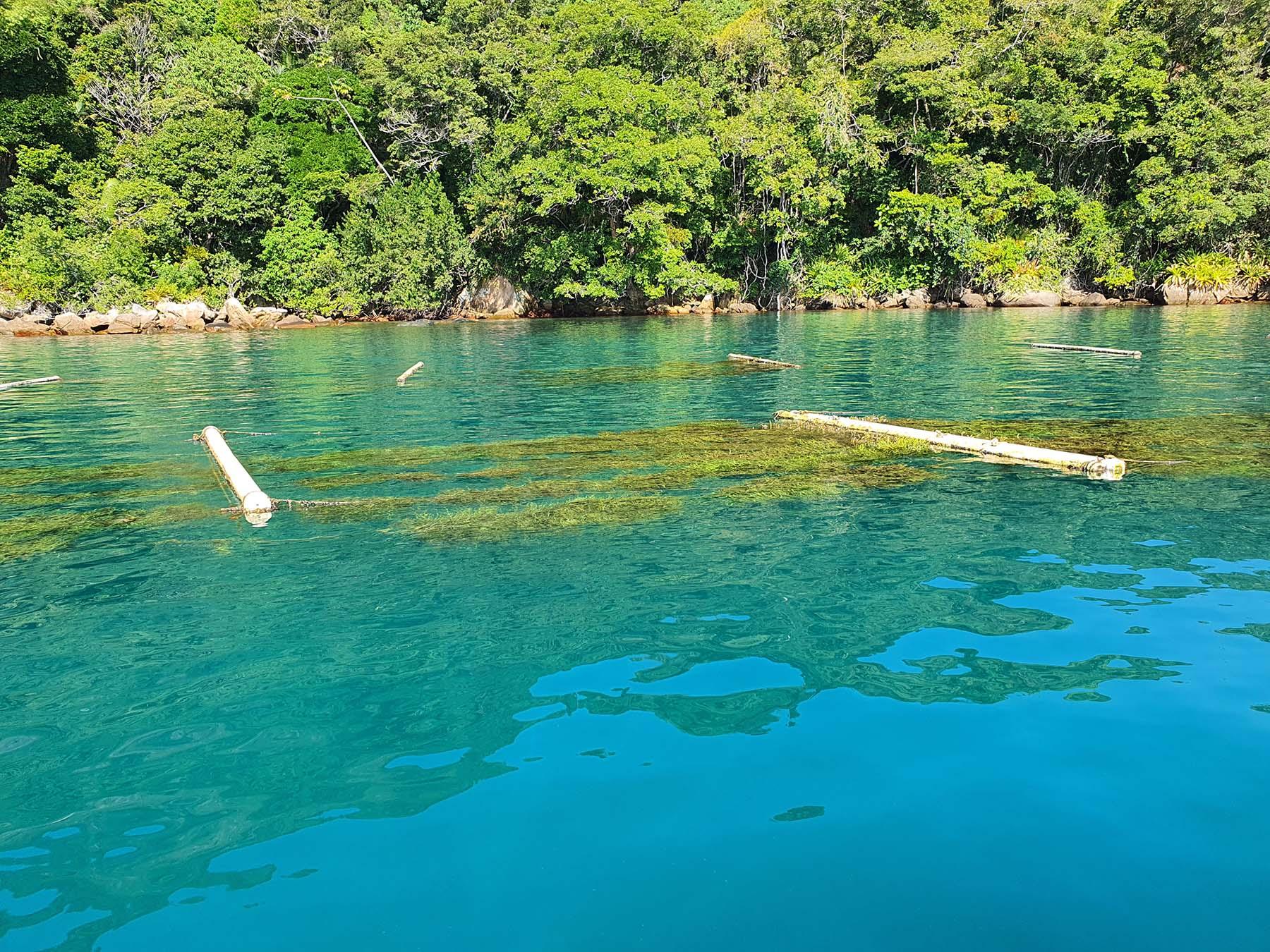 Saco do Mamanguá, Paraty, dicas de passeio de barco