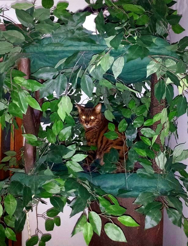 Wood Cat Trees, Best Wood Cat Furniture