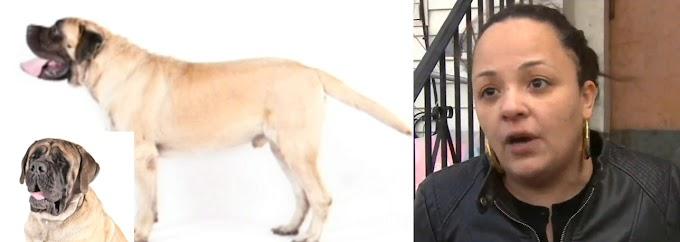 """Una anciana hispana de 75 muere atacada  en Queens por su perro """"Mastín"""" adoptado en 2011"""