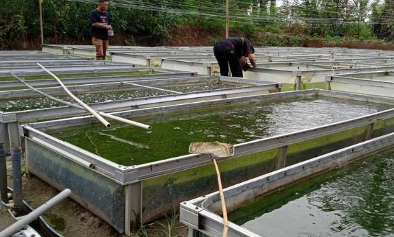 Daftar Harga Jual Ikan Lele Bandung, Jawa Barat