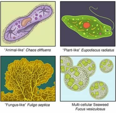 91 Gambar Protista Hewan Tumbuhan Dan Jamur Gratis