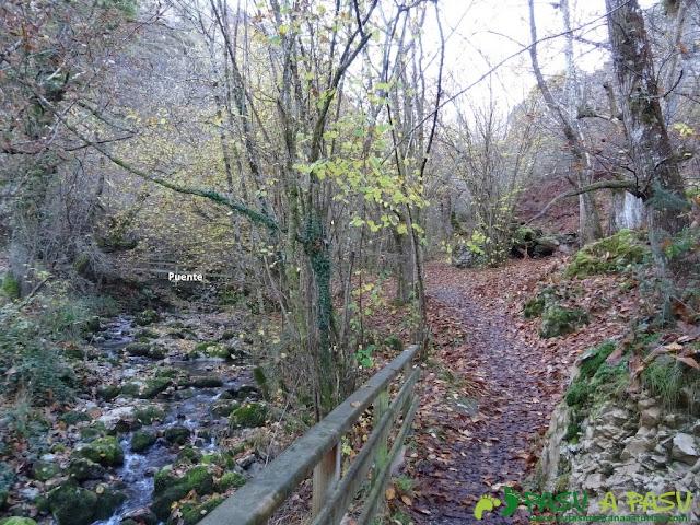 Inicio del Bosque en la ruta de Beyu Pen