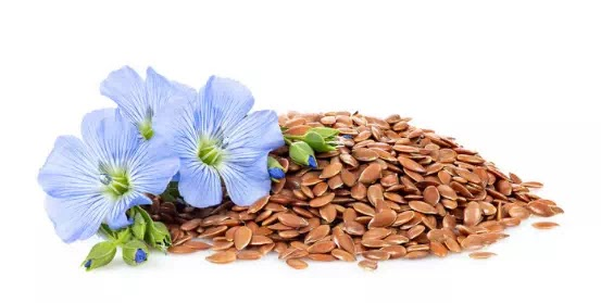 Flax Lily