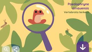 Paedophryne Amauensis, Google Doodle