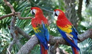 تنسيق أمني مغربي إسباني يُطيح بشبكة دولية متخصصة في تهريب الطيور النادرة