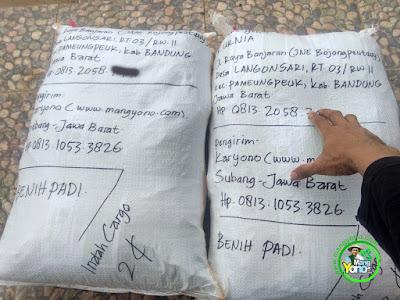 Benih Padi TRISAKTI Pesanan  KURNIA Bandung, Jabar. (Sesudah di Packing)