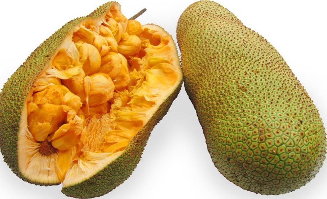 Bibit Tanaman Buah Cempedak Durian 40cm Jawa Barat