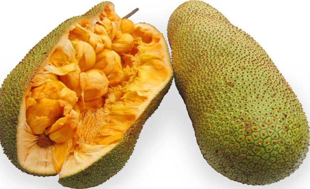 Bibit Tanaman Buah Cempedak Durian 40cm Pangkalpinang