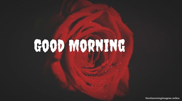 Good Morning Images In Roses 7