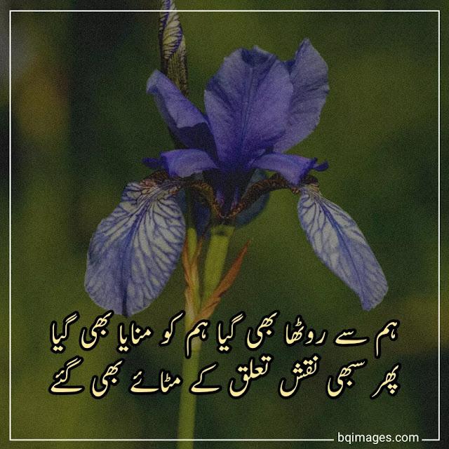 urdu shayari dp pic