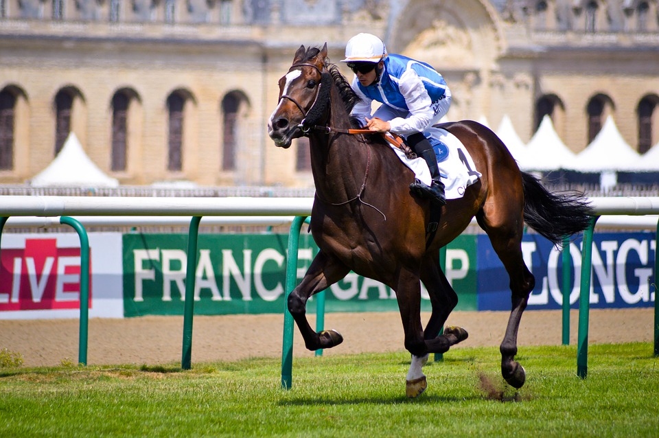 Fastest Horse Breeds – Top 5