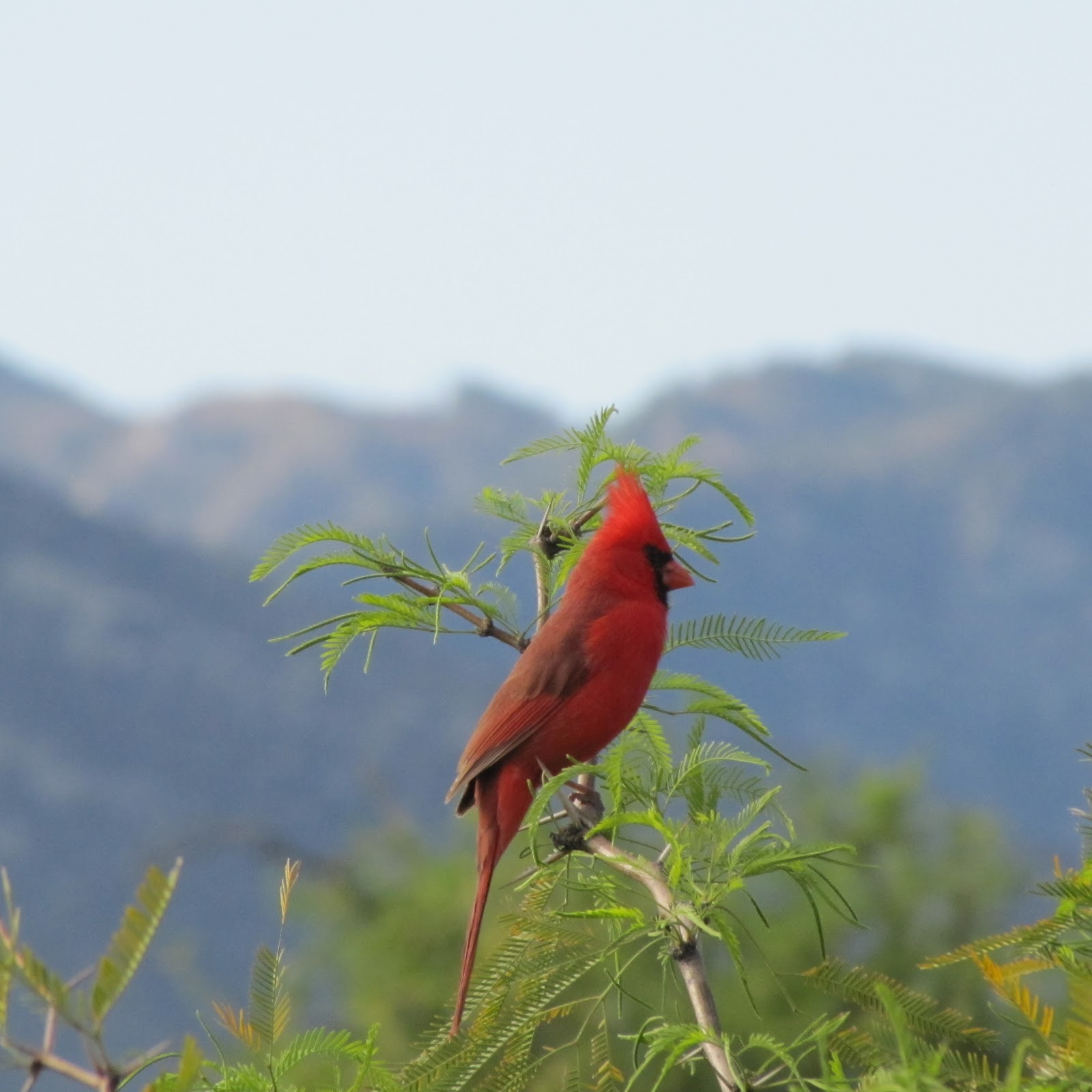 Free Download Wallpaper HD : Sparrow Bird High Resolution