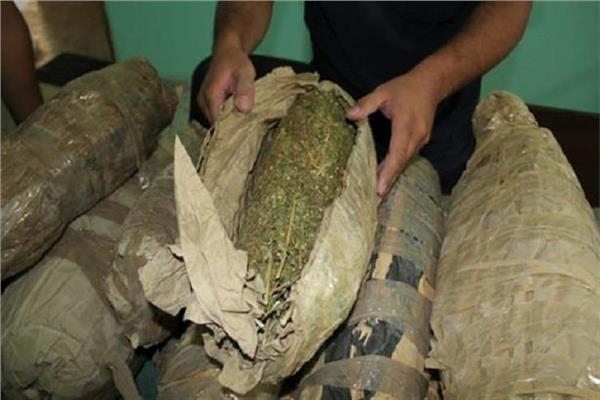 ضبط اثنين من العناصر الاجراميه بحوزتهما 450 كيلو من نبات البانجو