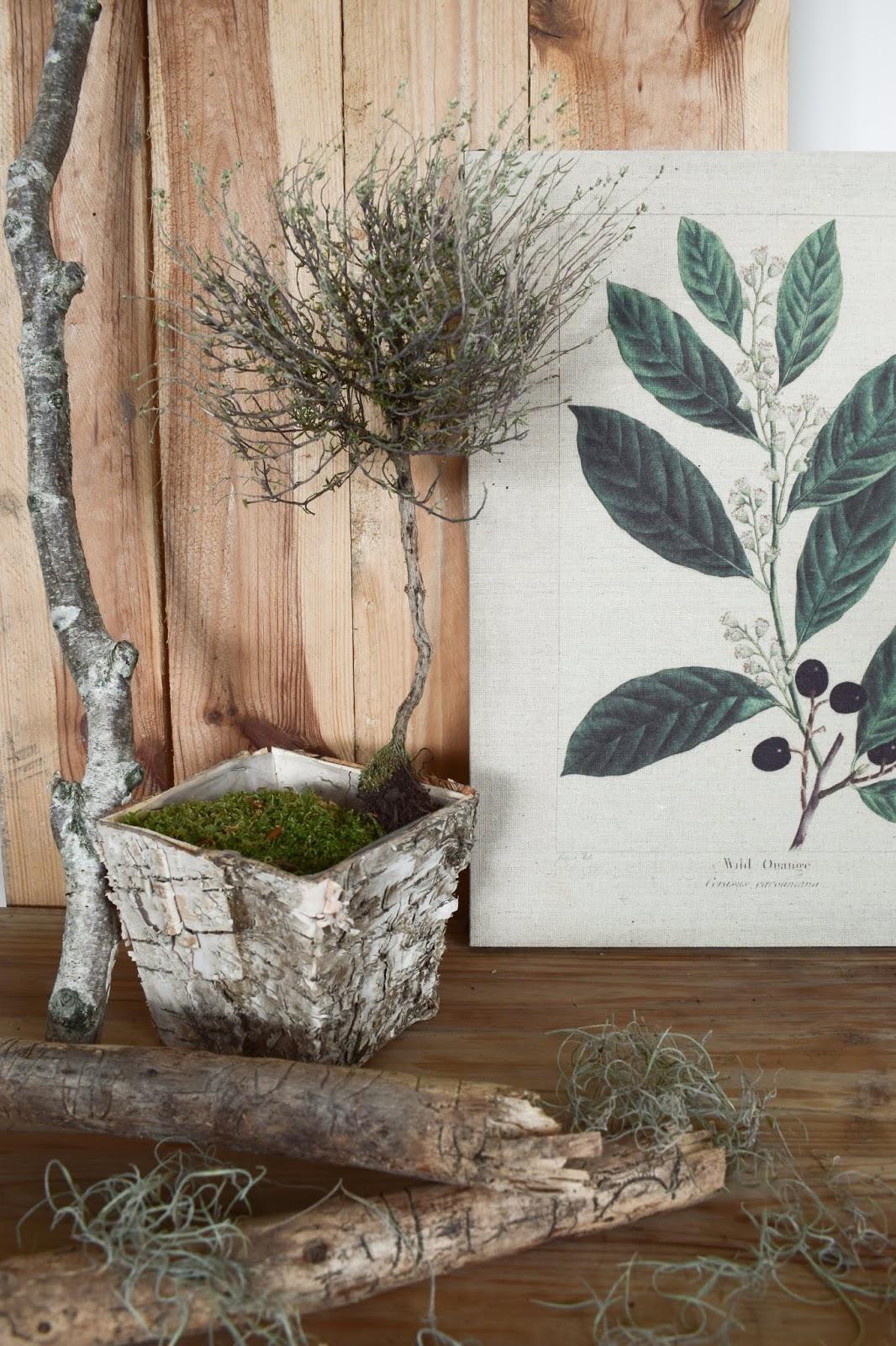 Dekoidee mit Thymian Stamm Deko Dekoration getrocknet Naturdeko natürlich dekorieren