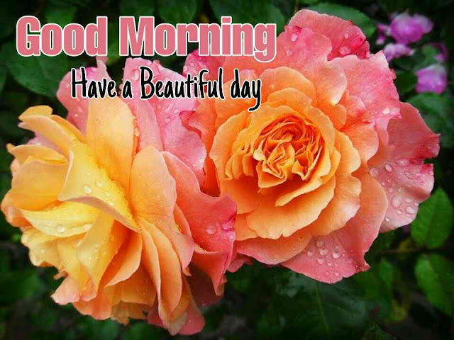 Beautiful Good Morrning image with twin rose flower have a nice day
