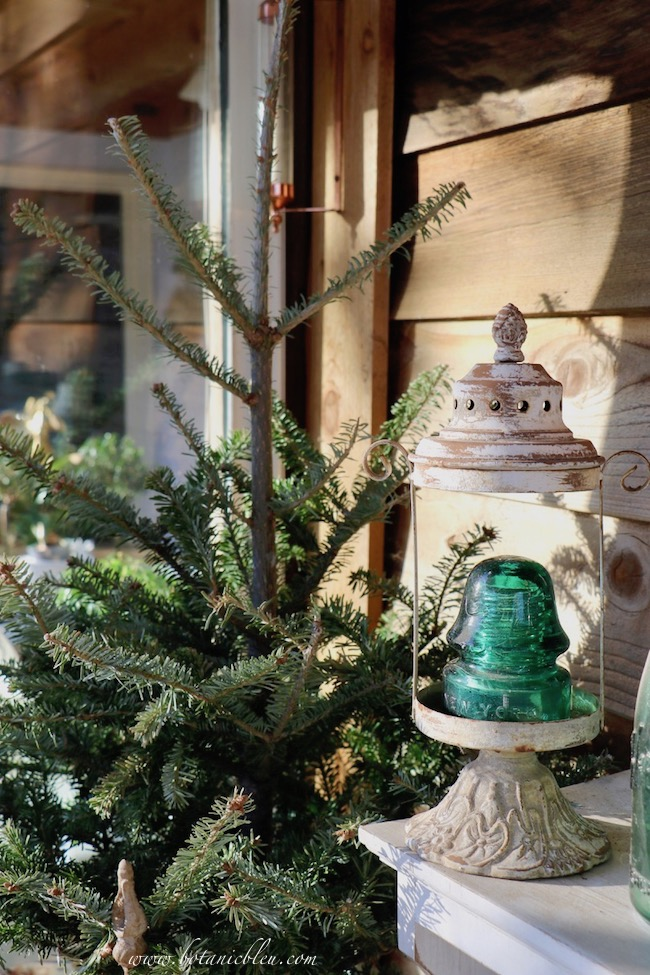 Christmas trees recycled as outdoor greenery provide beautiful arrangements for several weeks into Winter