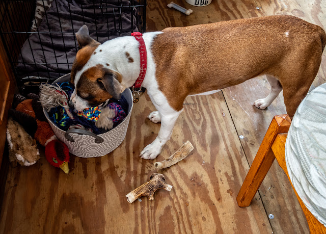 Photo of Ruby sorting through her toy box