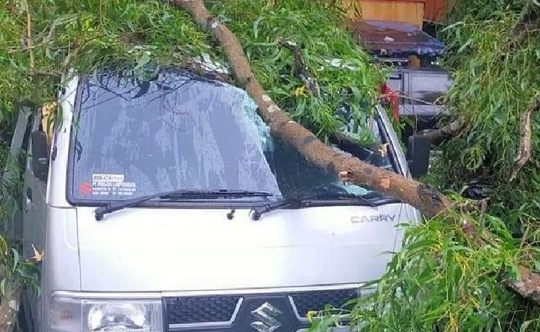 Pohon Tumbang di Metro Tiga Mobil Ringsek