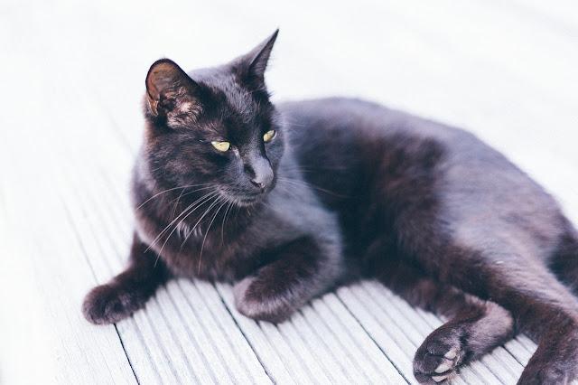 "Cooking black cats in Vietnam to treat ""Corona"""