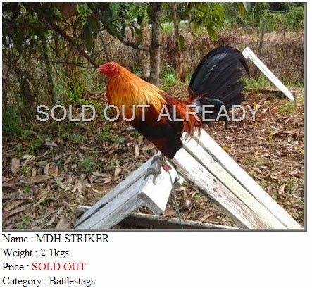 MDH STRIKER SOLD OUT