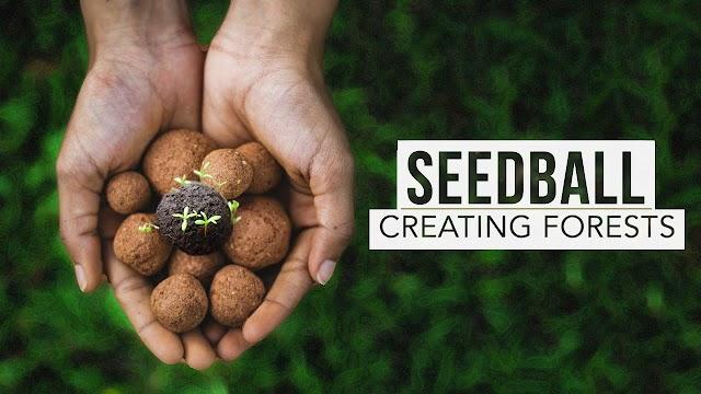 Seedball(बीजगोळा) यंदाच्या पावसाळ्यात करण्यासारखा एक सुंदर उपक्रम