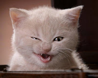 The cat that mastered the stink eye !