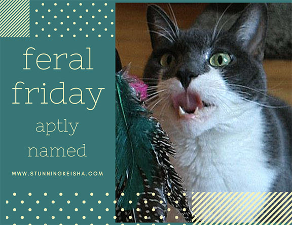 Aptly Named Feral Friday