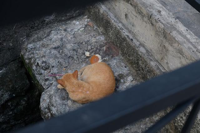 Gato cubano/Manu Torras