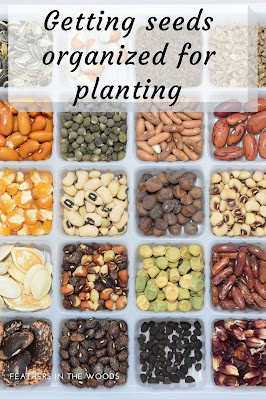 Garden seeds separated in separate squares of a dish
