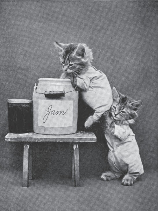 Creepy Cat Portraits From The Early 1900s Vintage Everyday