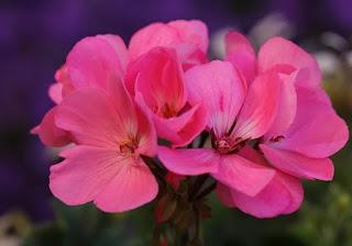 flower image download