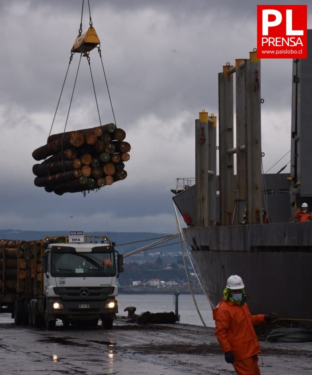 Primera exportación de rollizos de pino a China